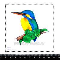 Шаблон для броши Колибри на веточке, фетр Корея Премиум, толщина 1,25 мм, размер 10*10 см 063044 - 99 бусин
