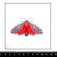 Шаблон для броши Мотылек, фетр Корея Премиум, толщина 1,25 мм, размер 10*10 см 063145 - 99 бусин