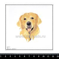 Шаблон для броши Золотой ретривер 871, фетр Корея Премиум, толщина 1,25 мм, размер 10*10 см 063250 - 99 бусин