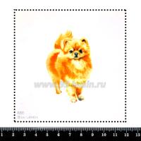 Шаблон для броши Шпиц, фетр Корея Премиум, толщина 1,25 мм, размер 10*10 см 063283 - 99 бусин