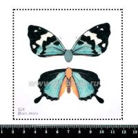 Шаблон для броши Бабочка 3D/из двух частей, цвет голубой, фетр Корея Премиум, толщина 1,25 мм, размер 10*10 см 063922 - 99 бусин