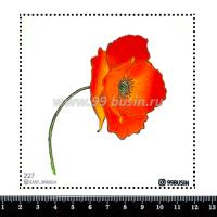 Шаблон для броши Мак, фетр Корея Премиум, толщина 1,25 мм, размер 10*10 см 064367 - 99 бусин