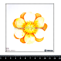 Шаблон для броши Цветочек 959 фетр Корея Премиум, толщина 1,25 мм, размер 10*10 см 064563 - 99 бусин